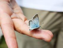 Blauer Schmetterling auf einer Hand Lizenzfreie Stockfotografie