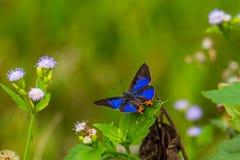 Blauer Schmetterling und wilde Blumen mit grünem Hintergrund Stockbild