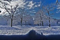 Blauer Schnee lizenzfreie stockfotos