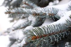 Blauer schneebedeckter Baum Lizenzfreie Stockbilder