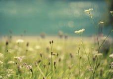 Blauer See im Park mit Blumen Lizenzfreies Stockfoto