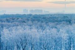 Blauer Sonnenaufgang im frühen Morgen des sehr kalten Winters Stockfotos