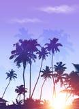Blauer Sonnenaufgangpalmenschattenbild-Plakathintergrund Stockfoto