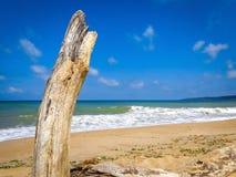 Blauer sonniger Himmel des trockenen Baumstamm-Seestrandwellenküsten-Sommers Lizenzfreies Stockbild