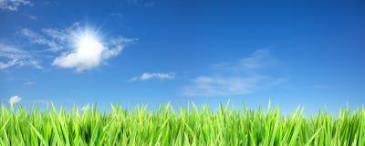 Blauer sonniger Himmel und grünes Gras Stockbild