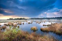 Blauer stürmischer Himmel über Sumpf mit Wollgras Stockfotos