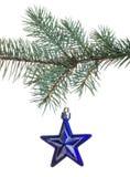 Blauer Stern auf Tannenzweig Stockfoto