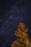 Blauer Stern-Spuren und alaskischer gezierter Baum nachts Lizenzfreie Stockfotos