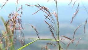 Blauer Talhintergrund der wilden Blumen stock video footage