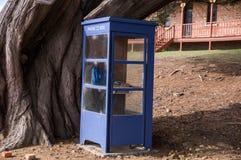 Blauer Telefonkasten mit altem Baum in Tasmanien, Australien lizenzfreie stockfotos