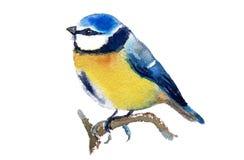 Blauer Tit Lizenzfreies Stockbild