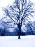 Blauer Ton-Winter-Baum stockfotografie