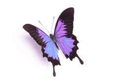 Blauer und bunter Schmetterling auf weißem Hintergrund Lizenzfreies Stockfoto