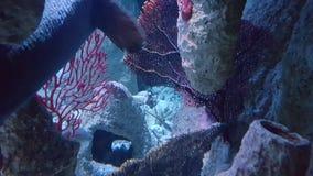 Blauer und purpurroter Ozean Stockfoto