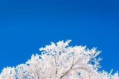blauer und weißer Winterhintergrund Stockfoto