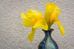 Blauer Vase mit gelber Iris Auf dem Hintergrund der beige Wand Stockbild