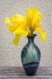 Blauer Vase mit gelber Iris Der Vase steht auf einem Holztisch auf einem Hintergrund der beige Wand Lizenzfreies Stockfoto