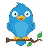 Blauer Vogel auf Niederlassung Stockfotos