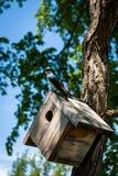 Blauer Vogel auf Nistkasten lizenzfreie stockbilder