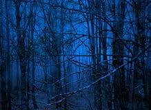 Blauer Wald Stockbild
