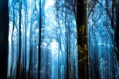 Blauer Wald Stockfotos