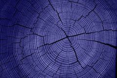 Blaues Baumkabel lizenzfreie stockfotografie