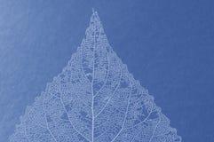 Blaues Blatt Stockfotografie