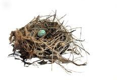 Blaues Ei in einem Nest Lizenzfreie Stockfotos