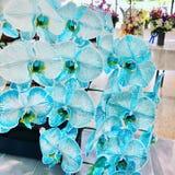 Blaues Endspiel der weißen Blume Stockfoto