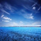 Blaues Feld und Himmel in der surrealen Farbe Lizenzfreies Stockfoto