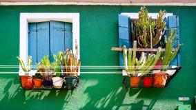 Blaues Fenster auf grüner Wand mit Kaktus Stockbilder