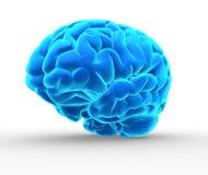 Blaues Gehirn Lizenzfreies Stockfoto
