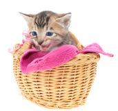 Blaues gemustertes Kätzchen im Korb Stockfotos