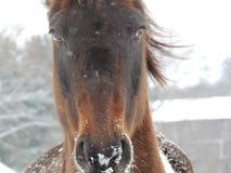 Blaues gemustertes Pferd Lizenzfreie Stockbilder