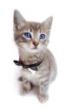Blaues gemustertes Tabbykätzchen mit den großen Ohren. Stockfotos