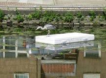 Blaues herron auf einer Matratze, die in einen Kanal in Amsterdam das N schwimmt lizenzfreie stockfotografie