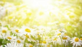 Blaues Meer, Himmel u Gänseblümchen in der Wiese werden durch die Strahlen der Sonne beleuchtet Lizenzfreies Stockfoto