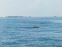 Blaues Meer, Himmel und Delphine Stockfoto