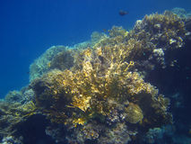 Blaues Meer mit Koralle Stockfotografie
