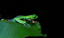Blaues mit Seiten versehenes Blatt frog.jpg Lizenzfreie Stockfotografie
