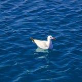 Blaues Mittelmeer mit Seemöweschwimmen Stockbild
