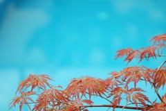 Blaues Pool Lizenzfreies Stockfoto