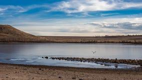 Blaues Reiherfliegen über gefrorenem winterlichem See lizenzfreies stockfoto