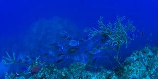 Blaues Riff lizenzfreie stockfotos