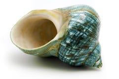 Blaues Seeshell Lizenzfreies Stockbild