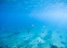 Blaues seichtes Wasser mit weißem Sand seabottom Unterseeisches Foto der tropischen Küste Stockfotos