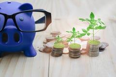 Blaues Sparschwein wird auf einen Bretterboden gesetzt, der mit Münzen gefüllt wird Und wachsende Bäume, mit dem Konzept von R lizenzfreie stockbilder