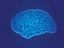 Blaues Technologie-Gehirn Lizenzfreie Stockbilder