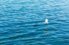 Blaues Wasser des Indigos und Weichzeichnung der Seemöwe Lizenzfreie Stockbilder