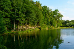 Blaues Wasser in einem Waldsee mit Kiefern Lizenzfreies Stockfoto